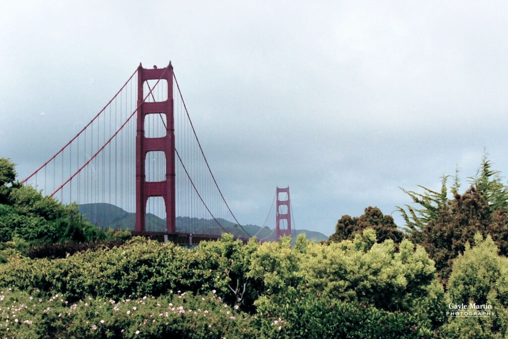 A vintage 35mm image of the Golden Gate Bridge behind a field of flowers.
